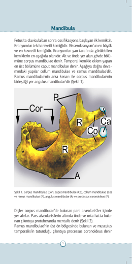 Mandibula - Journal of Clinical and Analytical Medicine