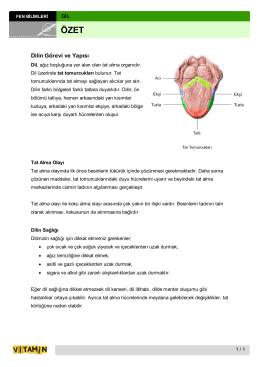 Dilin Görevi ve Yapısı