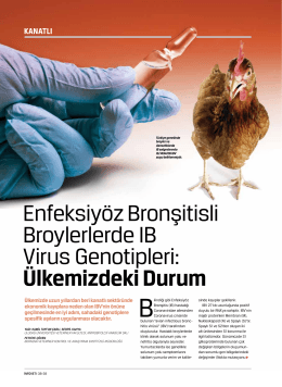 Enfeksiyöz Bronşitisli Broylerlerde IB Virus Genotipleri: Ülkemizdeki