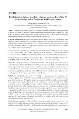 Triticum aestivum L. cv. Gün-91