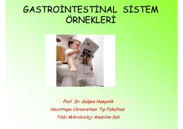 gastrointestinal sistem örnekleri gastrointestinal sistem örnekleri