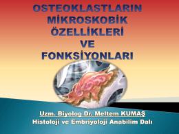 Osteoklastların kökeni, mikroskobik özellikleri ve