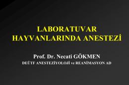 Laboratuvar Hayvanlarında Anestezi