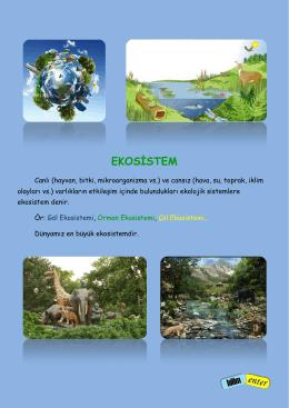 EKOSİSTEM - BilimEnter