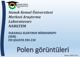 Polen görüntüleri - E-Universite