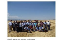 Konya İli Sarayönü İlçesi anıza ekim uygulama sahası