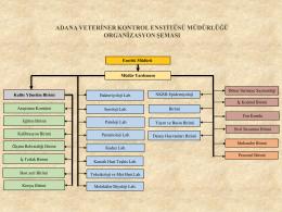 adana veteriner kontrol enstitüsü müdürlüğü organizasyon şeması