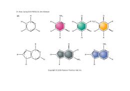 Ders Materyali - Bazlar - Nucleotide structures 2015