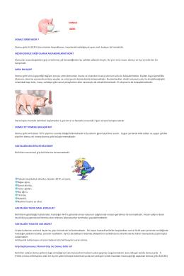 DOMUZ GRİBİ DOMUZ GRİBİ NEDİR ? Domuz gribi A (H1N1) tipi