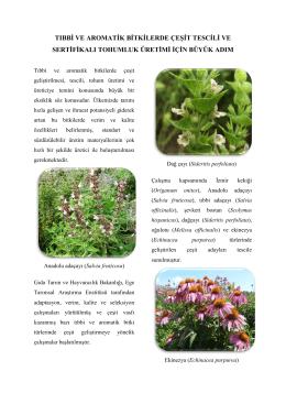tıbbi ve aromatik bitkilerde çeşit tescili ve sertifikalı tohumluk üretimi