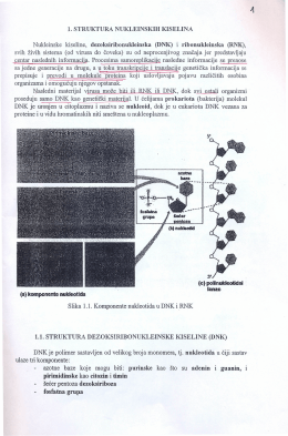 01 Struktura nukleinskih kiselina