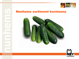 Nunhems sortiment kornisona
