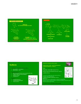 Kolhicin - farmakognozija