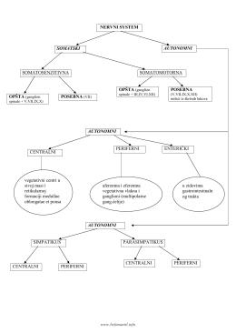 NERVNI SYSTEM SOMATSKI SOMATOSENZITIVNA