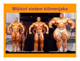 Mišićni sistem kičmenjaka