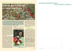 Růže od jezera Naivasha do našich květinářství