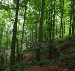 Wandervorschlag | Tip na výlet