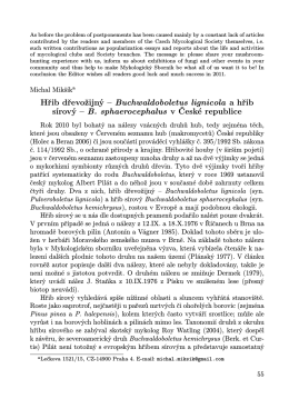 Hřib dřevožijný – Buchwaldoboletus lignicola a hřib