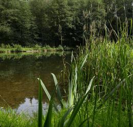 Gebirgsbäche | Horské potoky 134