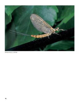 Entomologie str. 14-23