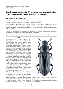 Coleoptera, Tenebrionidae