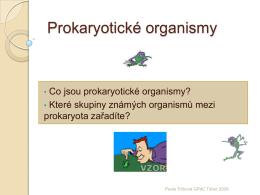 Prokaryotické organismy