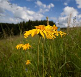 Hügellandwiesen | Louky středních horských poloh 232