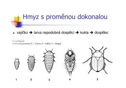 Hmyz s prom. dokonalou