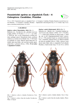Faunistické zprávy ze západních Čech – 6 Coleoptera: Carabidae