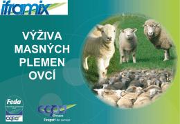 Výživa masných ovcí