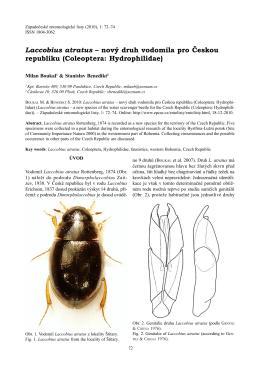 Laccobius atratus – nový druh vodomila pro Českou republiku