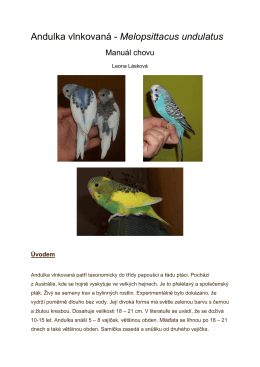 Andulka vlnkovaná - Melopsittacus undulatus