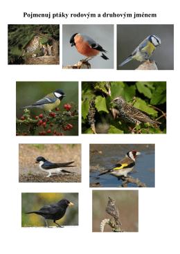 poznávání ptáků