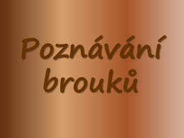 Poznávání brouků - zs.velkytynec.cz