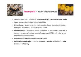 Ascomycota – houby vřeckovýtrusé