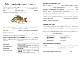 Ryby – nejpočetnější skupina obratlovců Dělení ryb: