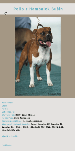 Polio z Hambalek Bušín - Staffordshire Bull Terrier Club CZ
