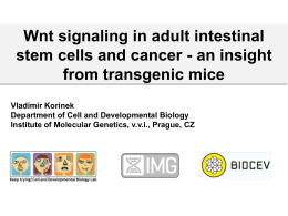 Wnt signaling in adult intestinal stem cells and cancer