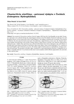 Chaetarthria simillima – potvrzení výskytu v Čechách (Coleoptera