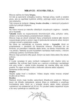 MRAVCE - STAVBA TELA