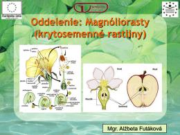 Oddelenie: Magnóliorasty (krytosemenné rastliny)