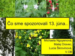 Miška Nguyenová, Maťo Oravec, Lucka Škrovinová
