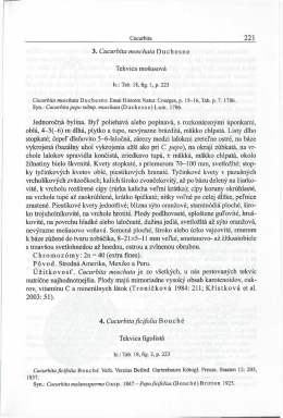 3. Cucurbita moschata Duchesne Tekvica mosusová Jednorocná