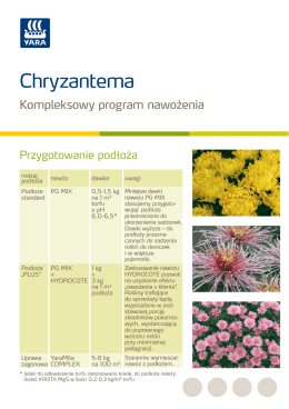 Chryzantema