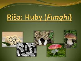 Ríša: huby (Funghi)