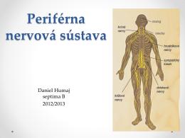 Periférna nervová sústava: