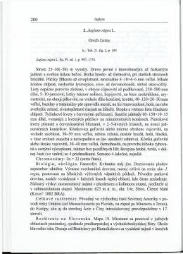 2. Juglans nigra L. Orech cierny Strom 25-30(