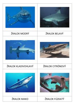 Druhy žralokov SK
