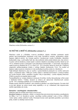 SLNEČNICA ROČNÁ (Helianthus annuus L.)