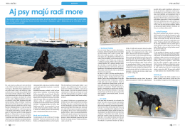 Aj psy majú radi more